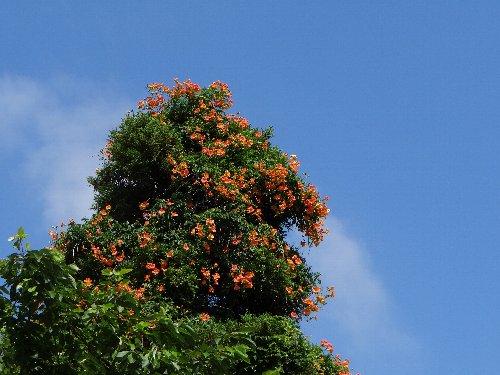 110713 杉の木の