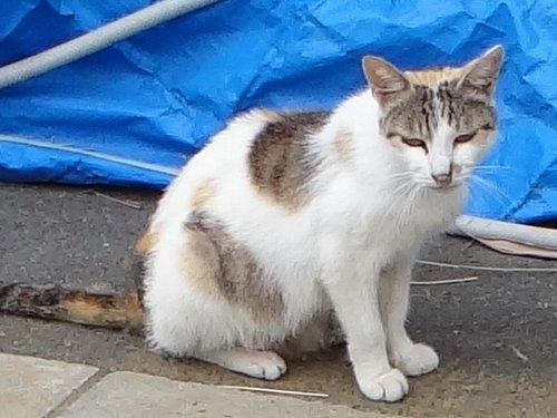 110806 目が 歌舞伎の猫
