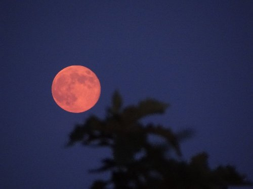 c 赤い月