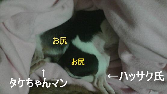 P1005395.jpg