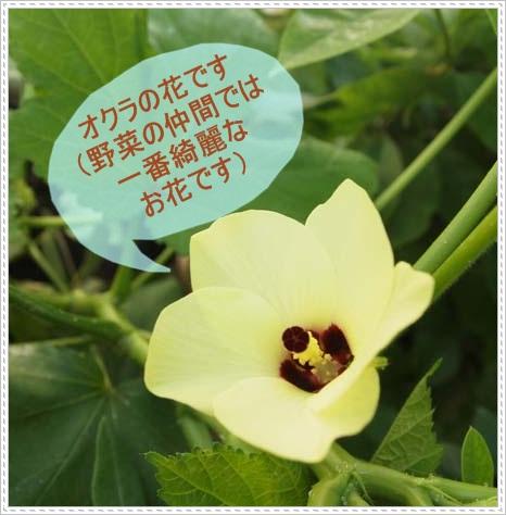 2011_0803_090127-P8034020.jpg