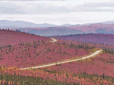 アラスカ,トップオブザワールド