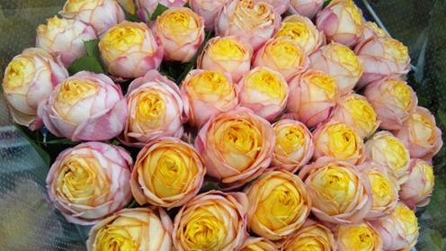 baby_romantica0101.jpg