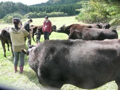 田中畜産?