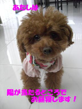 2_20100322234737.jpg