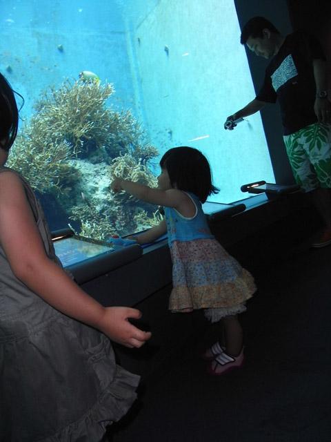 チュら海水族館かえ