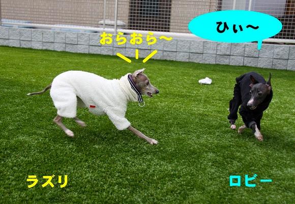 IMG_015.jpg