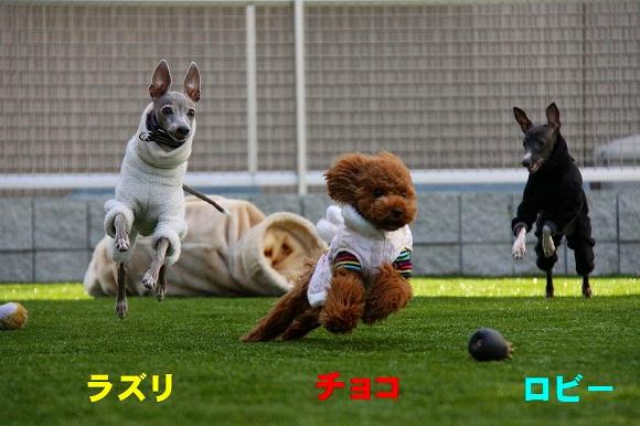 IMG_040.jpg