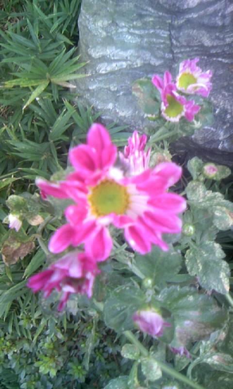 091016_150059小菊