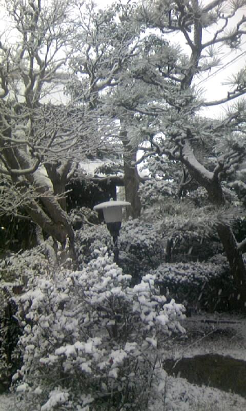 100113_083917庭の雪