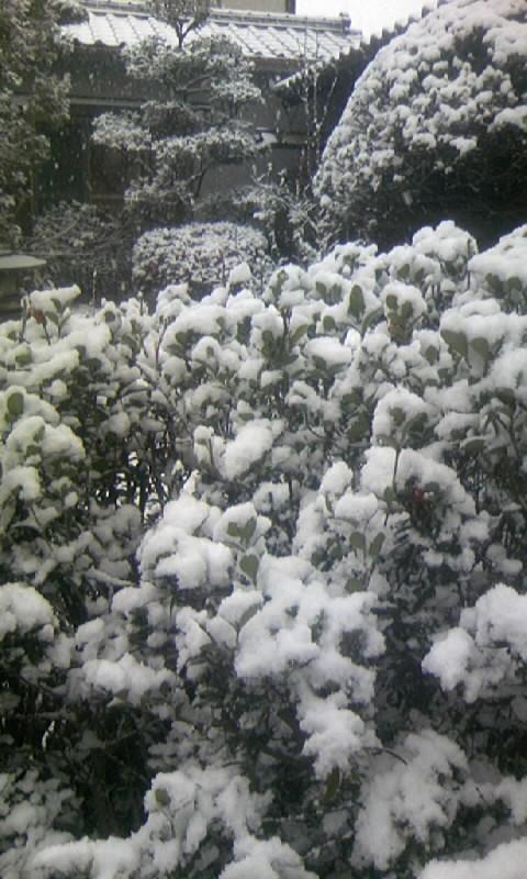 100113_083857庭の雪