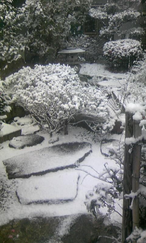 100113_083829庭の雪