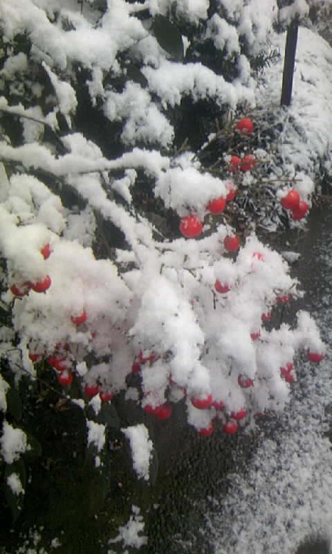 100113_085117庭の雪