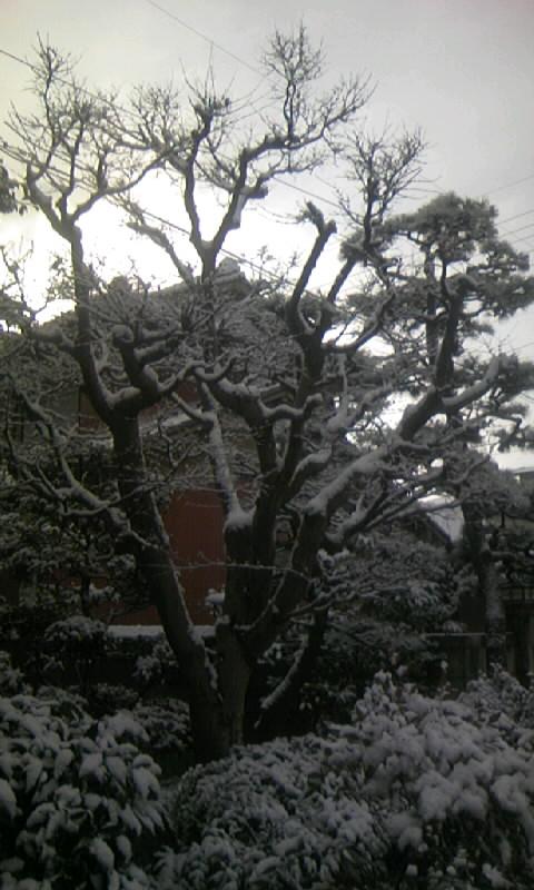 100206_083023雪景色