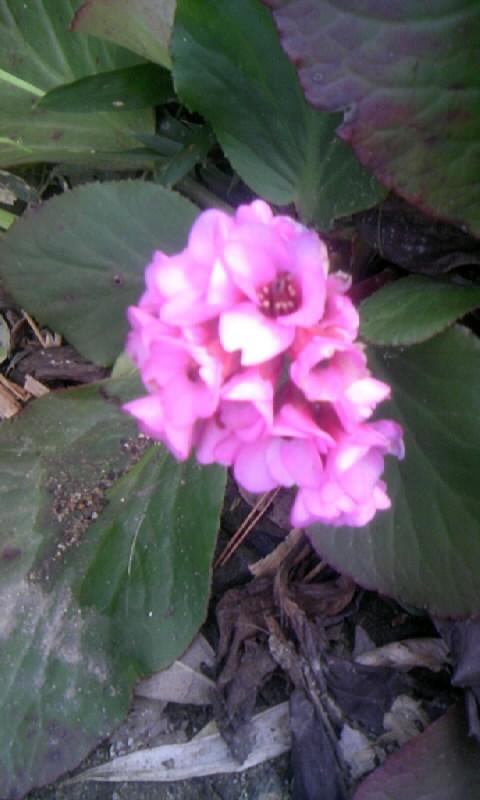 100209_150608何の花?