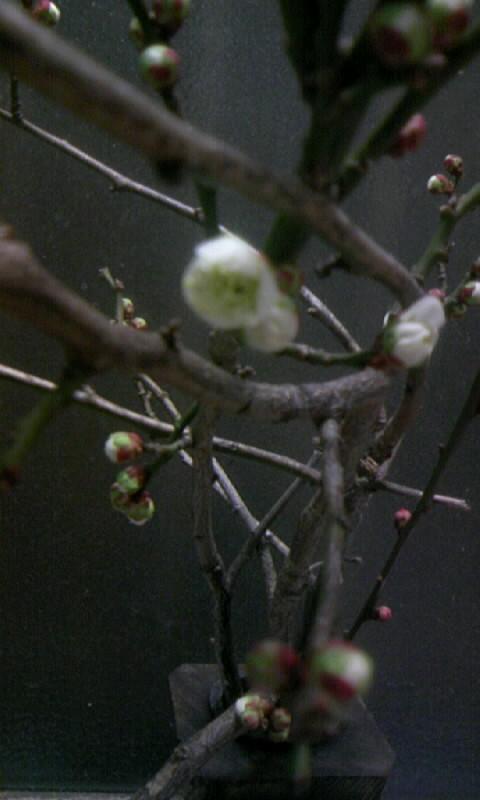 100213_191019食用梅