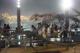 恐竜博物館ー06