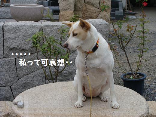 009kawaisou.jpg