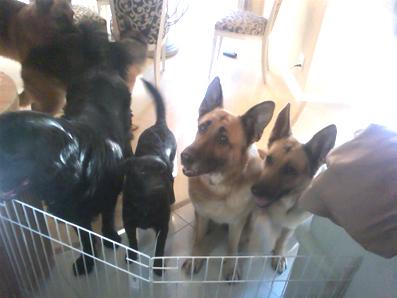 保護犬集合