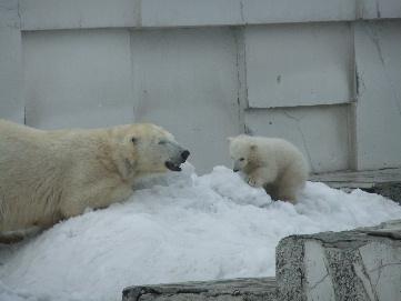 2011_04022011・4月動物園0035