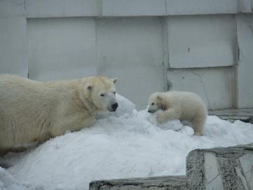 2011_04022011・4月動物園0036