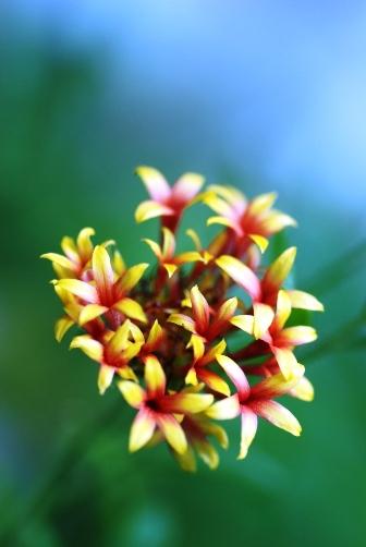 201007黄色い花①
