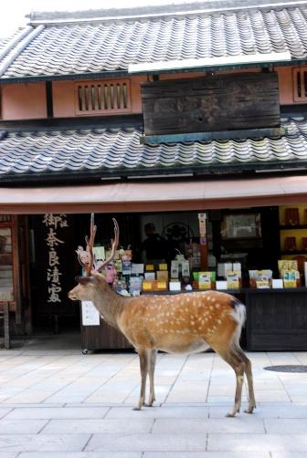 奈良漬けと鹿