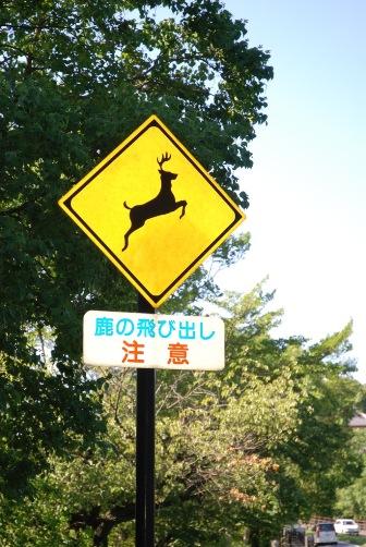 飛び出し注意!