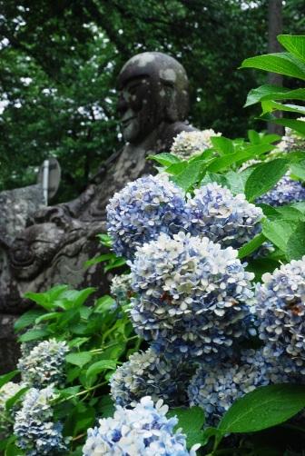 紫陽花とらかんさん
