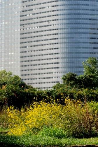 2010浜離宮・ビルとオミナエシ