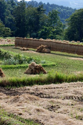 201010稲刈り後