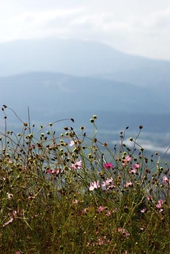 2010信濃の山とコスモス