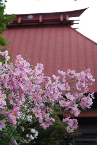 2010お寺の屋根と秋明菊