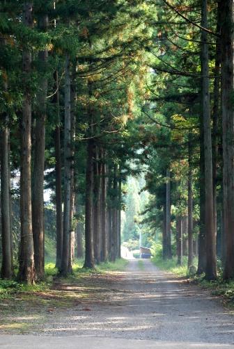 2010小菅神社杉並木