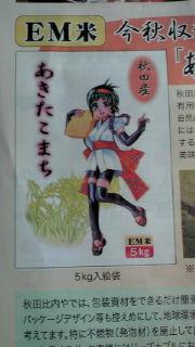 akita_komachi03.jpg