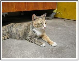 コーヒー屋台の猫