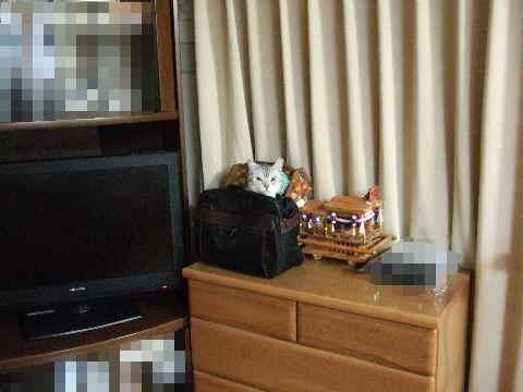 かばん猫1