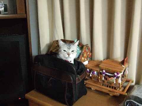 かばん猫2