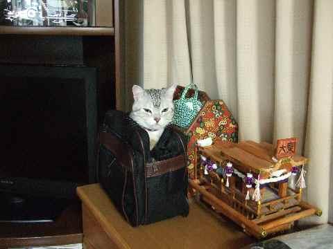 かばん猫3