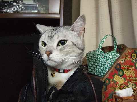 かばん猫4