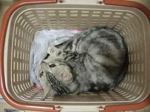 洗濯かご1