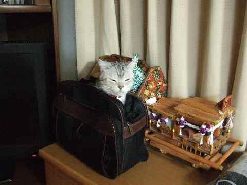 かばん猫5