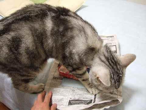 乱入する猫……
