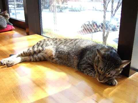 猫カフェ3