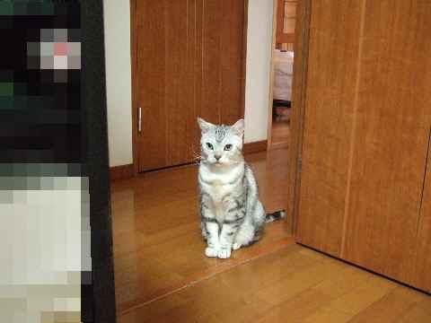 猫ひとり♪