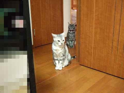 猫ふたり♪
