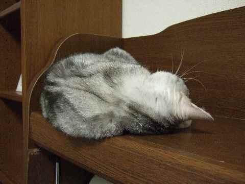 ある日の寝姿2