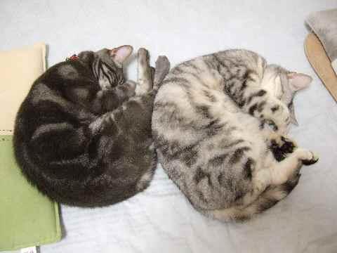 簡易猫団子