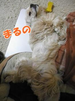 001_20110605234633.jpg