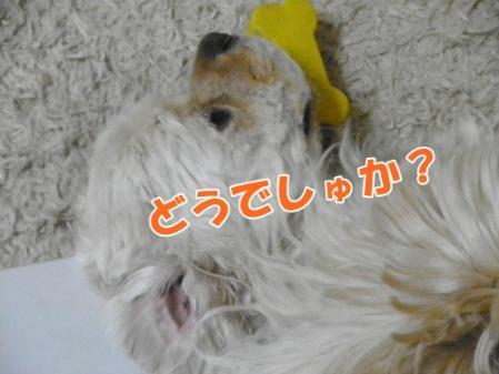 002_20110605234633.jpg